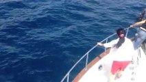 Dauphins sortie baleines