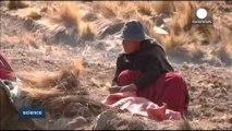 İklim değişikliği Bolivyalı çiftçilerin geleceğini tehdit ediyor