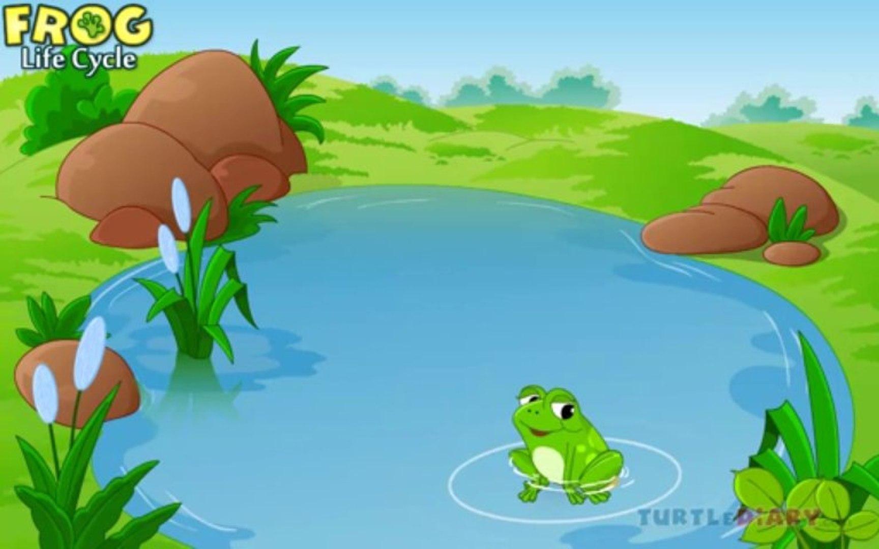 Kids Education Frog Life Cycle