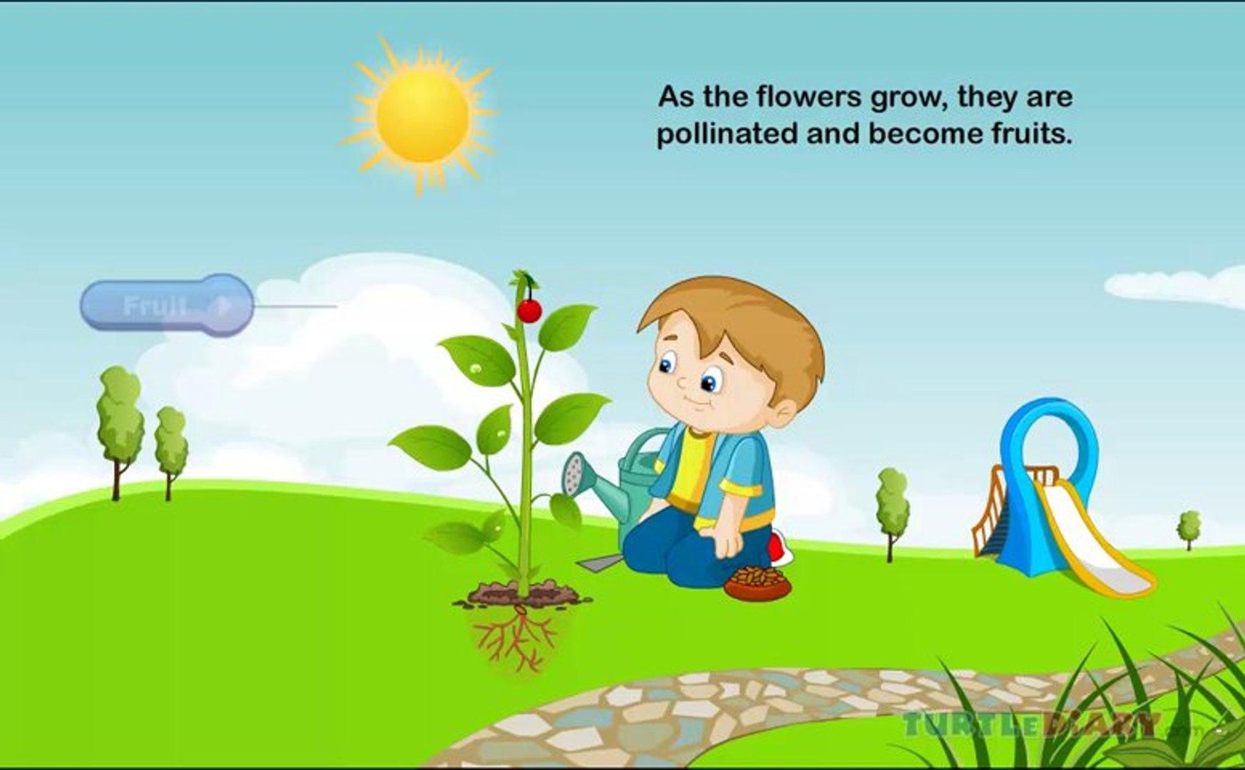 Kids Education Fun Educational life cycle