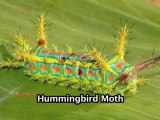 10 Weirdest  Looking Insects