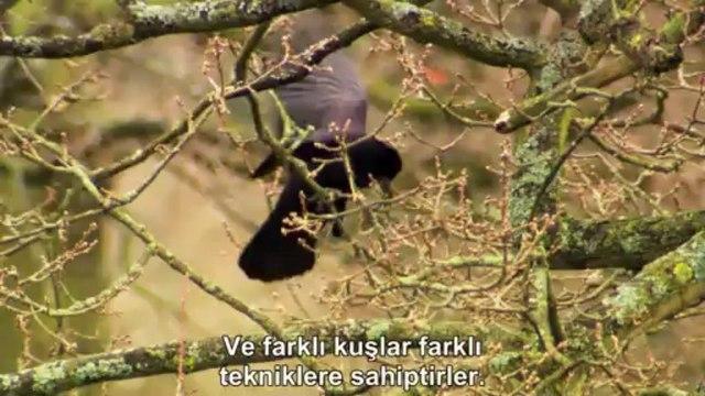 Kuşların Gizli Yaşamı: Tüylü Yuvalar | TrSub | 720p |