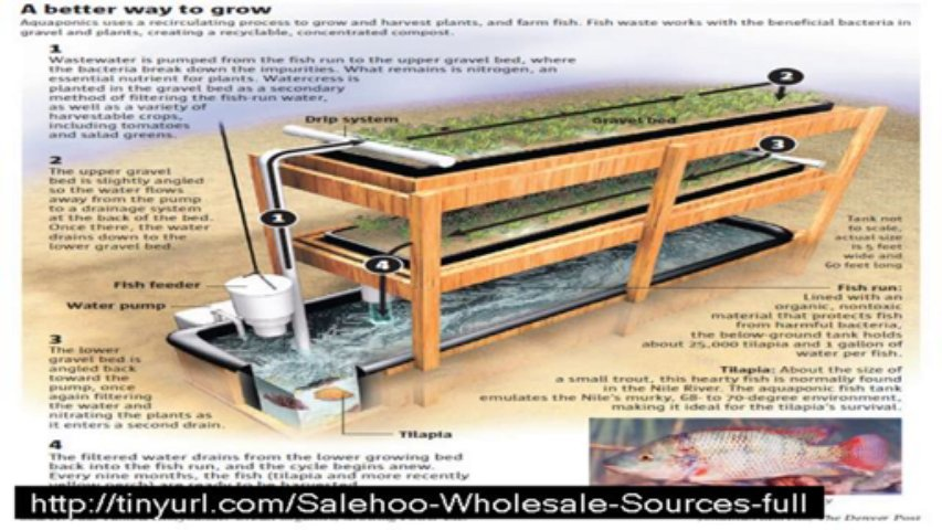 don't buy easy diy aquaponics  until watch  this video