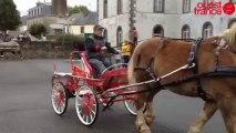 Dernière parade pour les chevaux et leurs maîtres - Concours de chevaux de trait