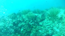Un petit moment d'une plongée à Playa Del Carmen octobre 2013