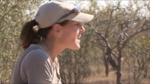 African Wildlife Stock footage - Photos of Africa