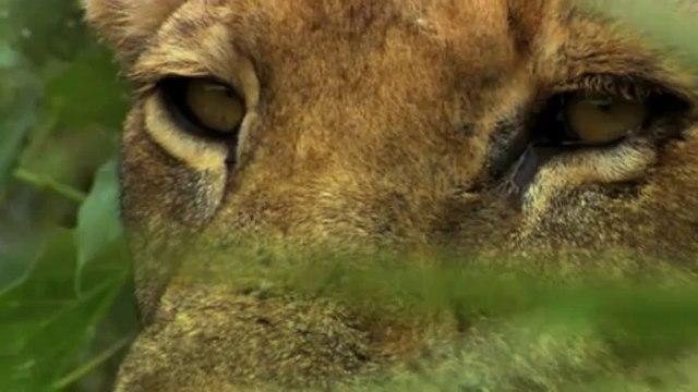 Son Aslanlar: 1.Bölüm | TrSub | 720p |