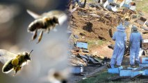 Accident on GA Interstate Releases Millions of Bees