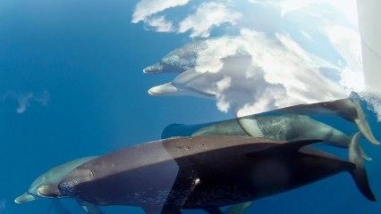 Des dauphins nagent dans le ciel accompagnés par des requins