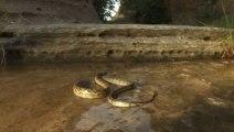 Serpent vs Fourmis