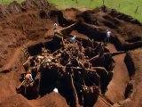 Galerie souterraine de fourmis avec du béton