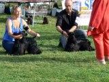 Au Chien Branché : Eric, ses chiens et les concours