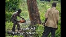 Preventing Environmental Crime (Video Short)