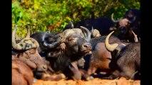 Photo Safari Wildlife Slide Show - Photos of Africa