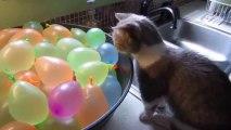 Petit CHAT trop mignon qui éclate des BALLONS plein d'eau!