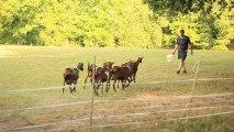 Producteurs du Pays d'Albret - La chèvrerie