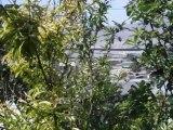 Pajaros en el jardin un colibri y los gorriones come nisperos
