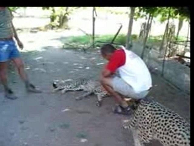 Pascal et le guepard ...