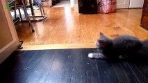 CHAT qui glisse sur le sol - Compilation d'animaux mignons!