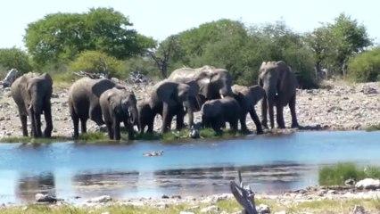 Namibie etape 10 - Etosha