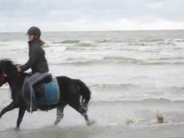 galop dans les vagues