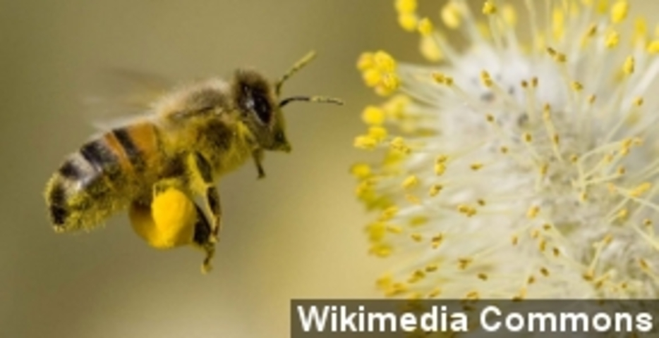 Designer Trains Bees To Detect Some Cancers