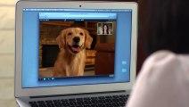 Webcam pour chien et chat - Petchatz - Complètement fou!