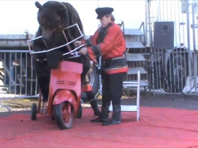 Un ours peut-il faire du scooter ? Test réalisé à Fourmies