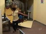 Dinosaure T-Rex en entretien d'embauche (Caméra cachée)