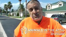 Get rid of Wildlife and Rats Inside Your Home - 321-614-6005 Animals in the Attic Melbourne FL