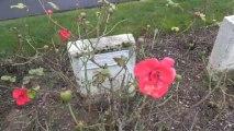 Les tombes des soldats Russes au cimetière Dunand-Saint-Amâtre