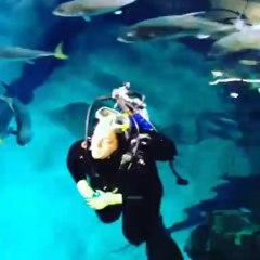 """Le requin Stella introduit dans le """"lagon aux requins"""" à Monaco"""