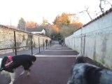 les chiens en Rhône Alpes à St Paul De Varax
