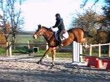 Séance d'obstacle poulains le 08/12/2013 - Groupe 1 - Formation cavalier jeunes chevaux / SANDILLON