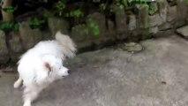 Des chiens qui ont peur des chats - Compilation d'animaux marrants. 2013