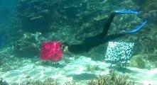 Australie : une galerie d'art sous-marine installée sur la Grande Barrière de corail