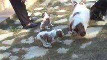 Les bébés dehors le 15.12.2013