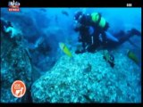 SOS Animal SIC 1º episódio (14-12-2013)