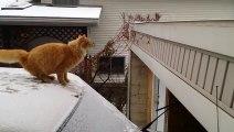 Un chat glisse sur la neige en voulant sauter  depuis le toit d'une voiture