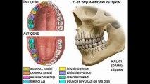 Çocuklar için diş eğitim videosu Diş Sağlığı Diş Masalı
