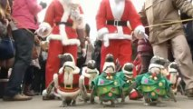 Penguins in Santa suits at South Korean zoo
