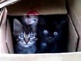 Top 10 Fail Sevimli Kediler! (Top 10 Fail Funny Cats!)_2