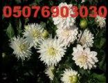 Turkey Florist Online Çiçek siparişi Çiçekçi Çiçekçilik cicekci cicek
