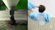 La physique des fourmis de feu