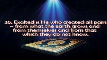 Surah Ya-Sin by Mishary Al-Afasi (complete surah)