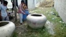 Une vache dans un pot