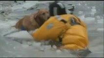 Deux pompiers se jettent dans l'eau glacée pour sauver un chien