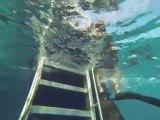 Australie- Queensland: Grande Barrière de Corail