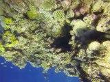 Australie- Queensland: Plongé sur la Grande Barrière de Corail (suite)