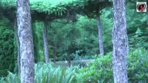Nordic pond tour 3 Japanese garden  - bassin de jardin Japonais
